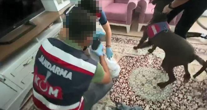 Narkotik köpeği evin her yerinde uyuşturucu buldu