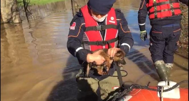 Taşkında mahsur kalan 3 yavru köpek kurtarıldı