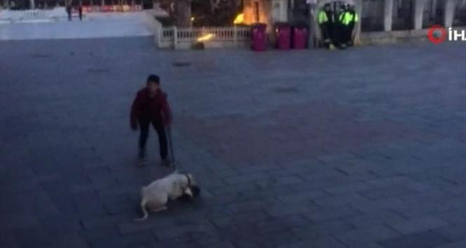 Eyüpsultan Meydanı'nda pitbull dehşeti