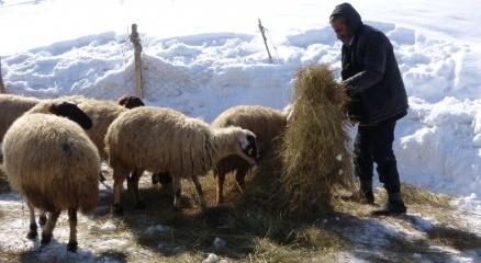Bataklığa saplanan ineğin sahibi Mehmet Emin Amca bu kış mutlu