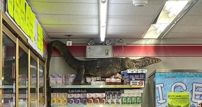Dev kertenkele girdiği markette paniğe neden oldu