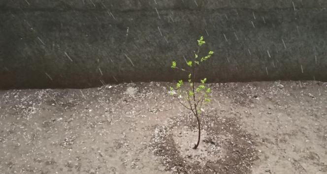 Iğdır'da kuvvetli fırtına sonrası dolu korkuttu