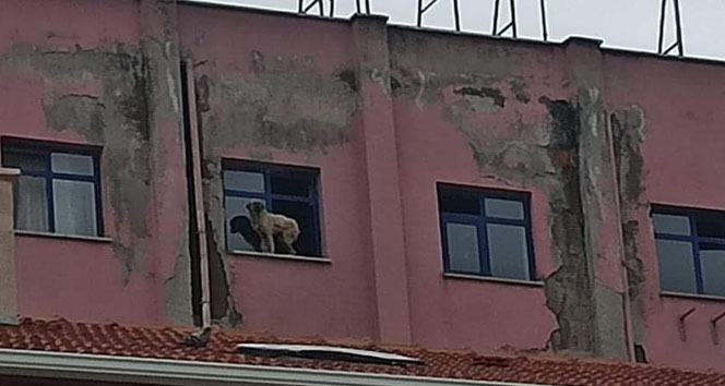 Binanın 9'uncu katındaki köpeğe seslenen vatandaş güldürdü