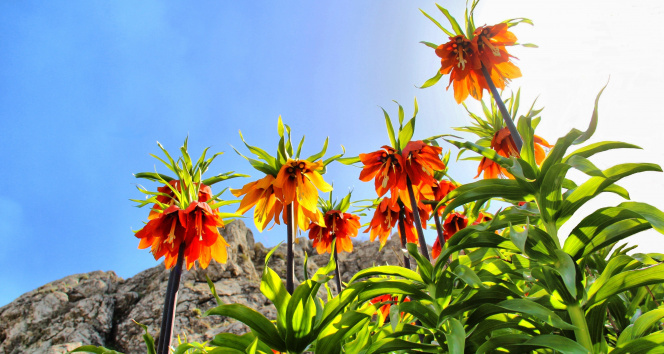 Bu çiçeği koparana 60 bin lira ceza