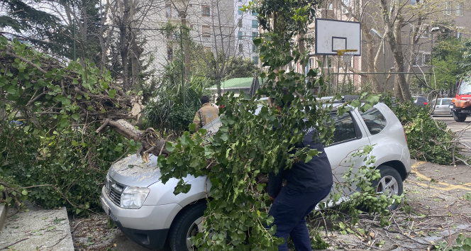 Kadıköy'de park halindeki otomobillerin üzerine ağaç devrildi