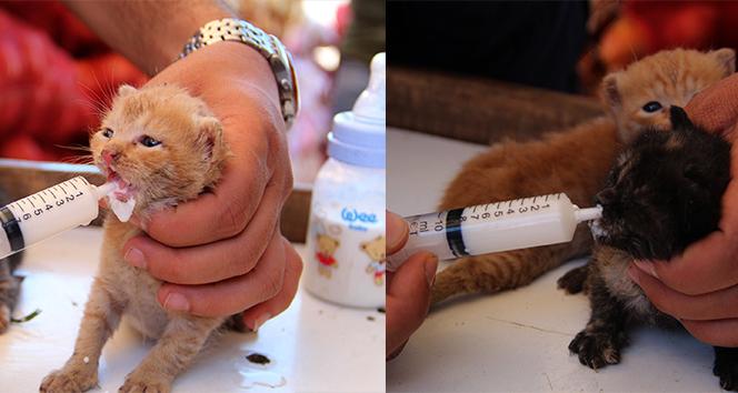Kamyonetinde son anda fark edip bulduğu yavru kedileri şırınga ile besliyor