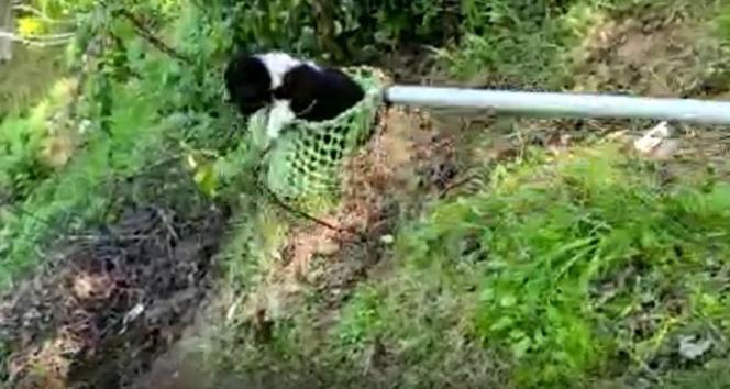 Köylüler uçuruma düşen köpeği kurtarmak için seferber oldu
