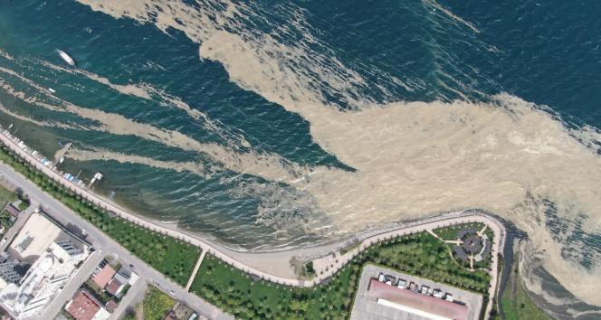 İzmit Körfezi'nde deniz salyası istilası artarak devam ediyor