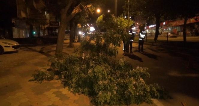 Fırtına ağaçları devirdi, binaların kaplamasını uçurdu