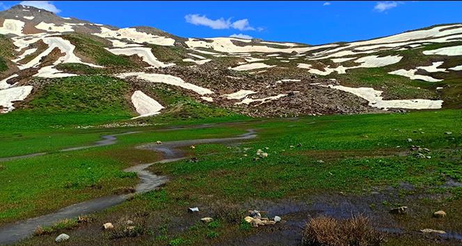 Beyaz ve yeşilin buluştuğu Şırnak yaylalarında kartpostallık görüntüler oluştu