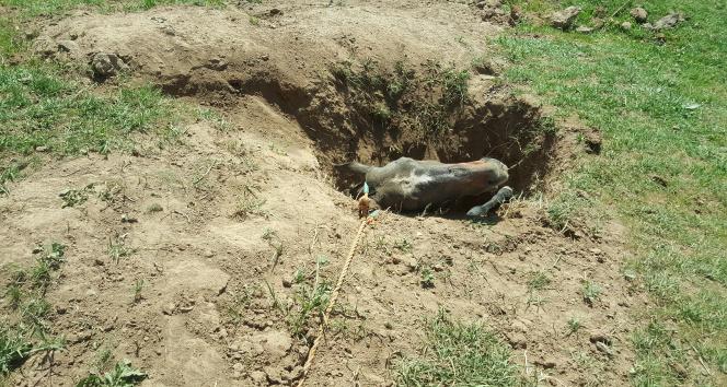 Definecilerin mezarlık bölgesinde kazdığı çukur atın sonu oldu