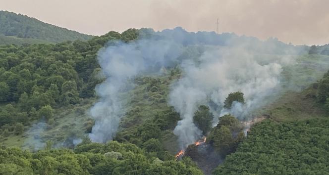 Bahçesindeki otları yakmak isterken ormanı yakıyordu