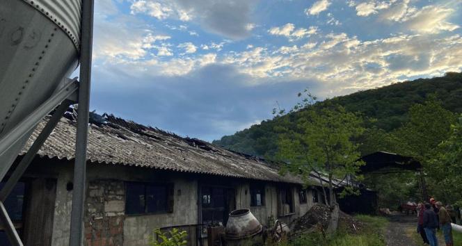 Sakarya'da tavuk çiftliğinde yangın: 10 bin 500 civciv telef oldu