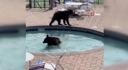 ABDde sevimli ayılar havuz partisini bastı