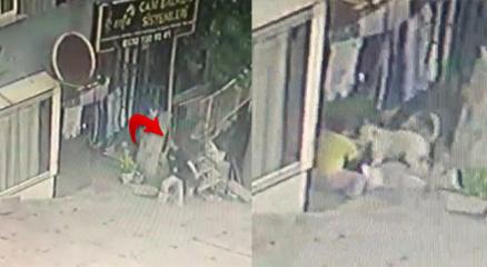 Başakşehirde 16 yaşındaki kıza pitbullar saldırdı