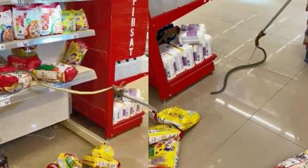Alışveriş için gittikleri markette rafların arasından yılan çıktı