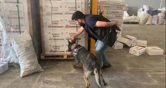 Dedektör köpek tepki verdi, bisküvi kutularından 16 bin paket kaçak sigara çıktı