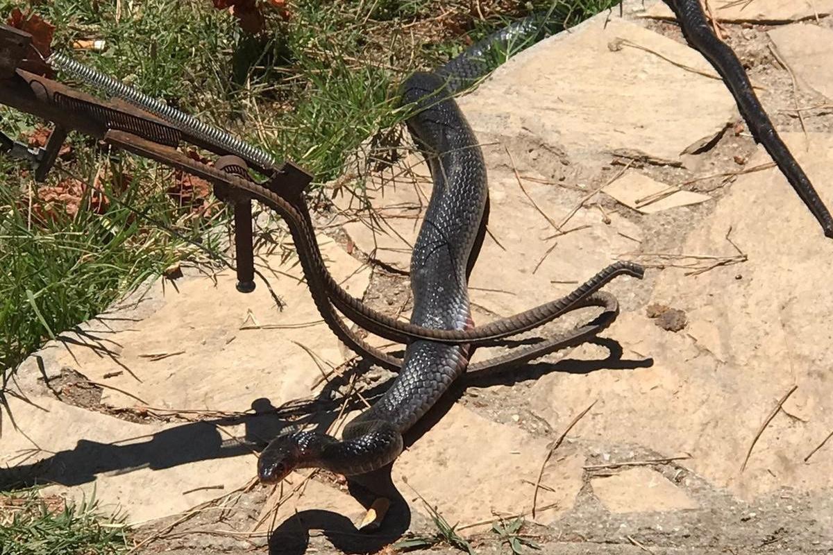 Marmaris'te eve giren yılan paniğe neden oldu