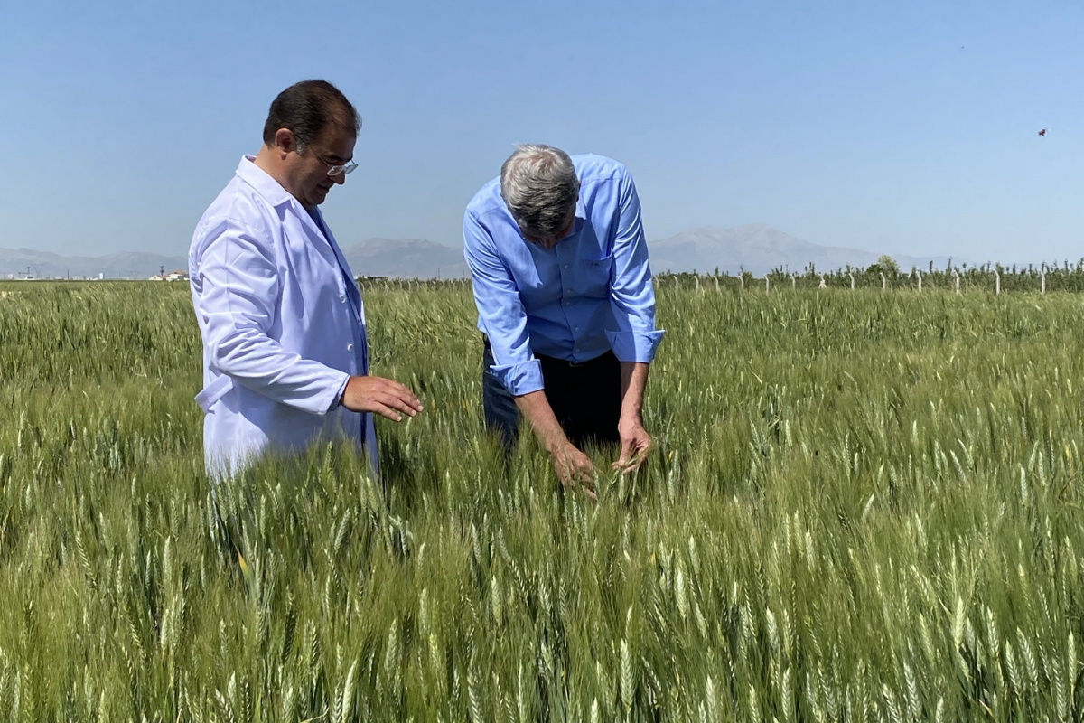 Türk yerli tohumu dünyaya açılıyor