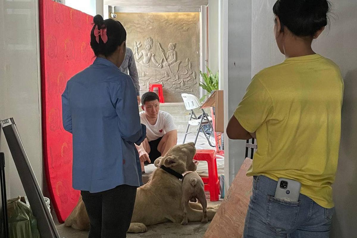 Kamboçya'da TikTok'da videoları yayınlanan aslana devlet el koydu