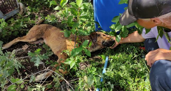 Sakat ve hasta köpekleri zehirlediler! sahipleri başında göz yaşı döktü