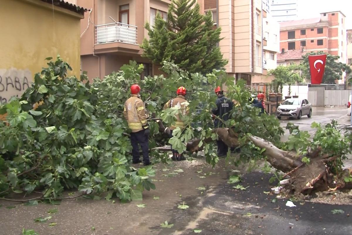 Kartal'da sağanak yağış nedeniyle ağaç devrildi