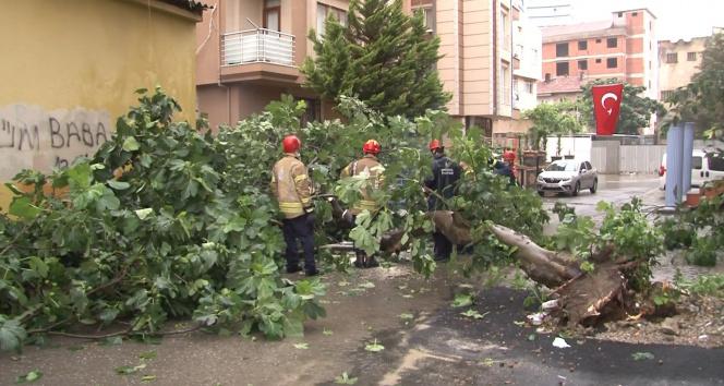 Kartalda sağanak yağış nedeniyle ağaç devrildi