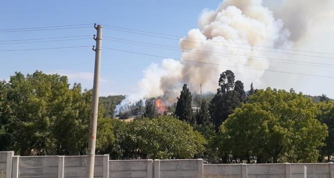Foçada ormanlık alanda yangın!