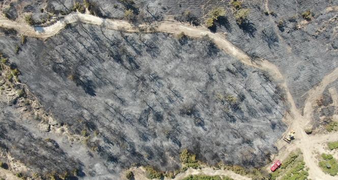 Foça yangınında hasarın boyutları havadan görüntülendi