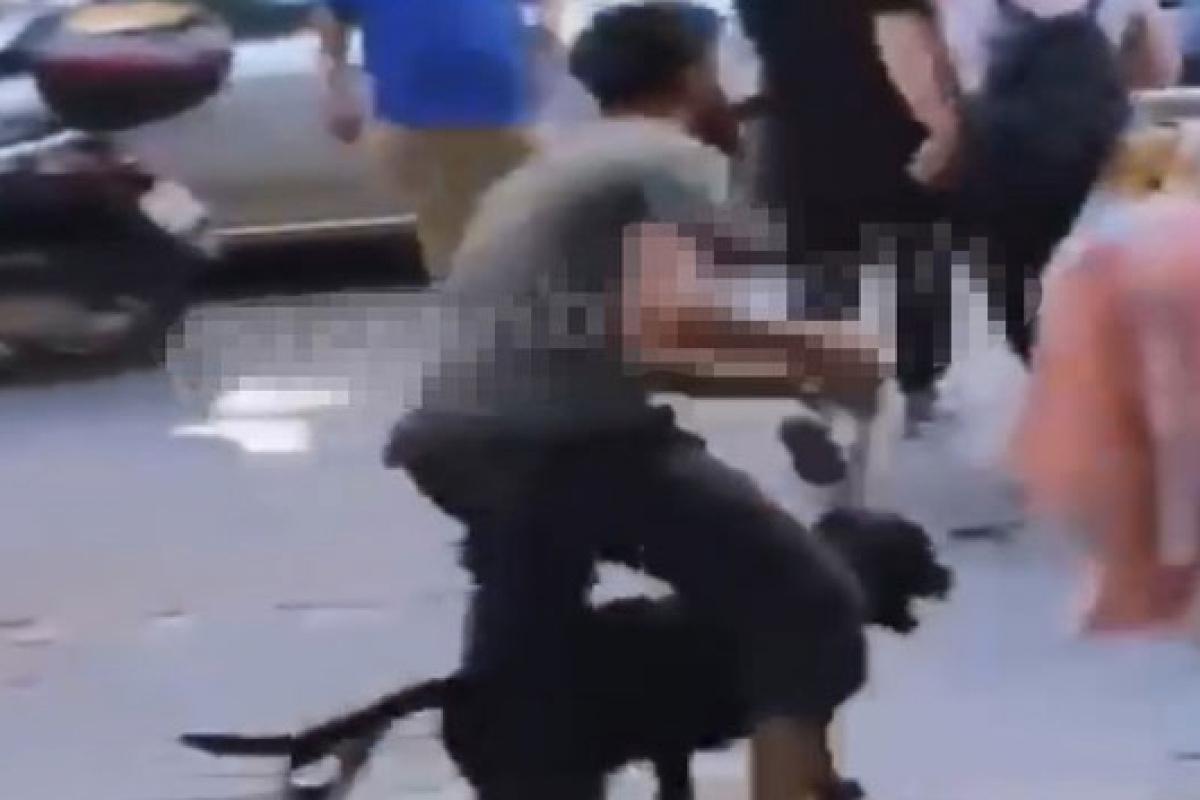 İstanbul'un göbeğinde labrador retriever dehşeti