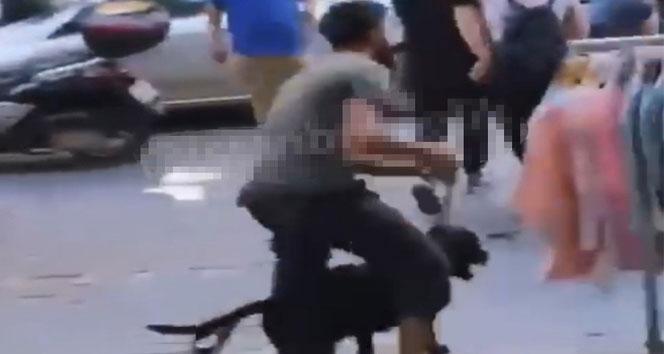 İstanbulun göbeğinde labrador retriever dehşeti