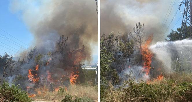 Manavgatta çıkan yangında 5 dönüm ormanlık alan zarar gördü