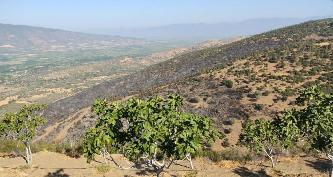 Nazillideki orman yangını kontrol altına alındı