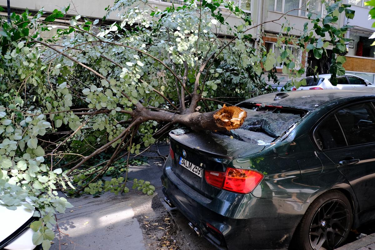 Ünlü oyuncunun lüks aracının üzerine ağaç devrildi