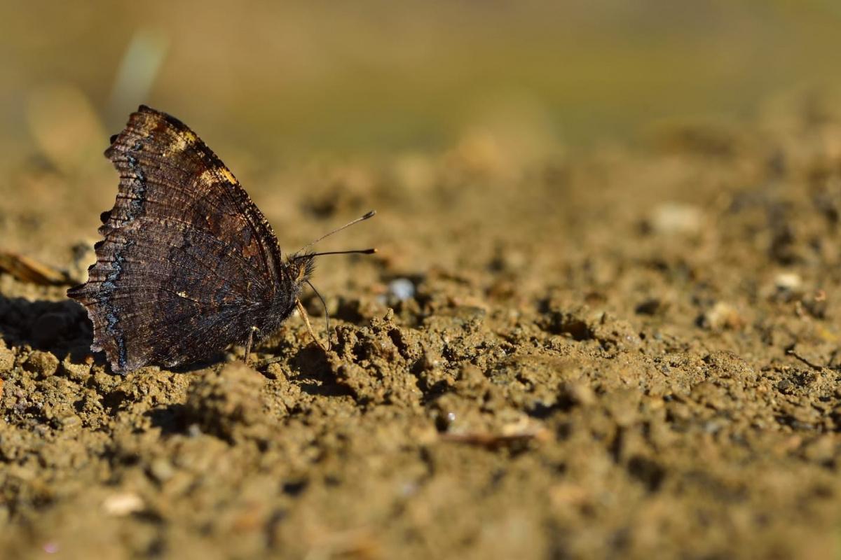 Van kelebekçilerin mekanı oldu