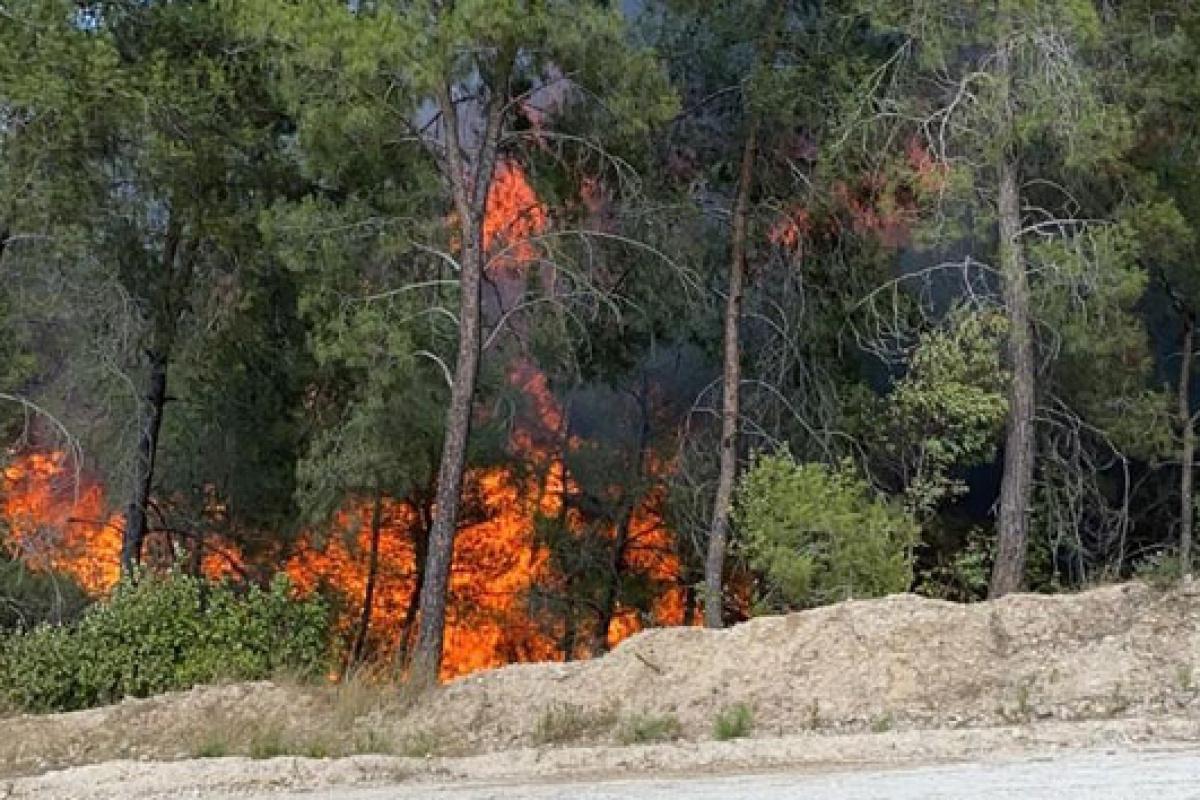 Adana'da iki ayrı orman yangını