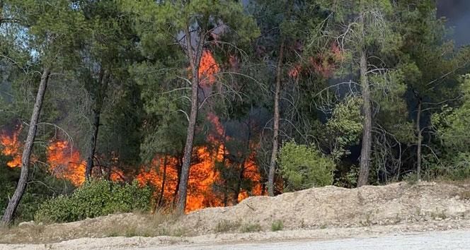 Adanada iki ayrı orman yangını