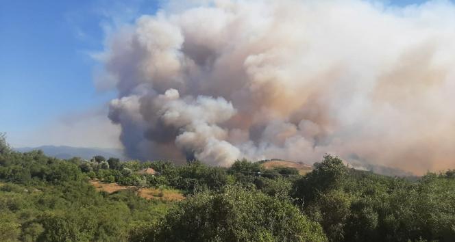 Osmaniyede korkutan orman yangınları!