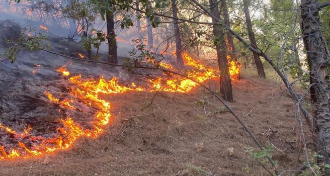 Mersin Aydıncıkta iki orman yangını