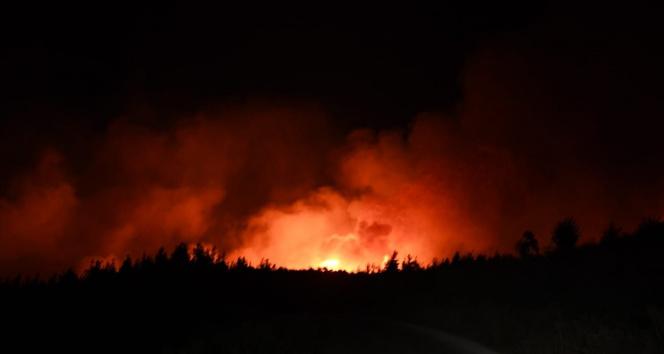 Adana Aladağda orman yangını