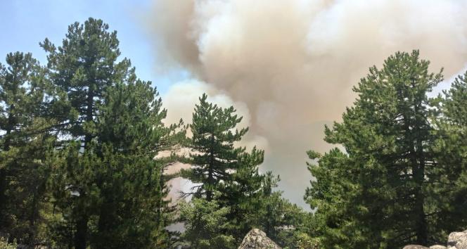 Kütahyada orman yangını çıktı
