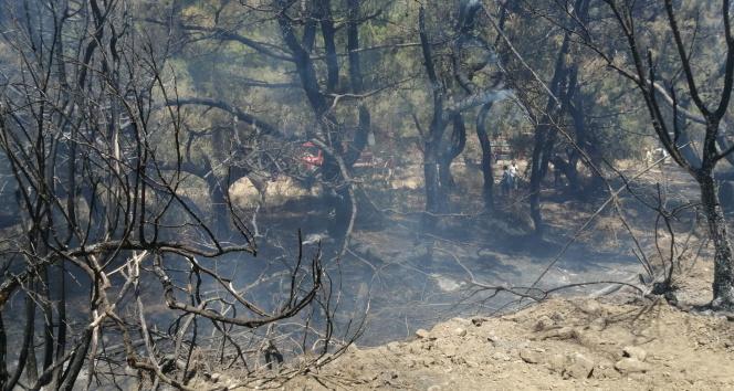 Datçada çıkan yangında 10 dönüm zirai alan zarar gördü