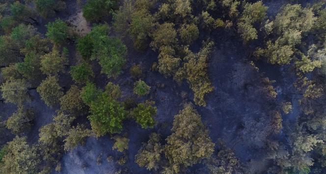 Kozandaki yangın kontrol altına alındı