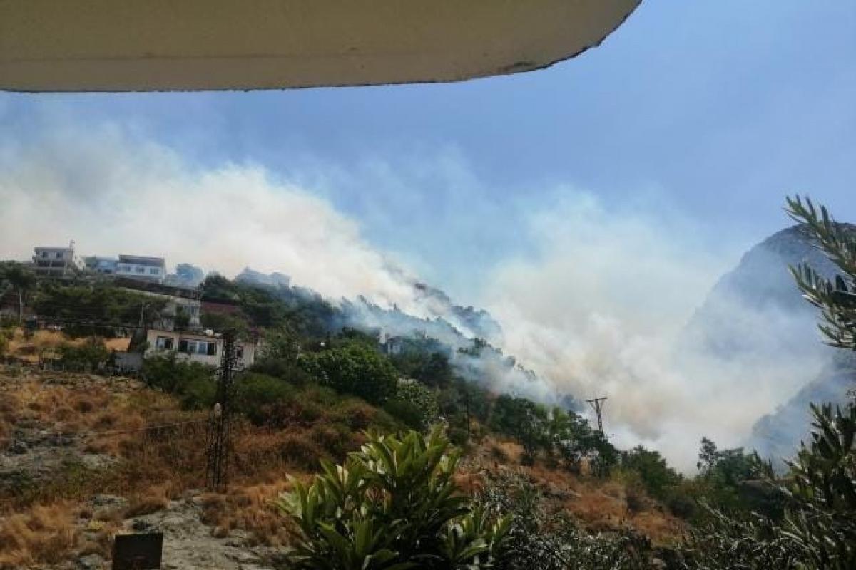 Hatay'da orman yangını: Alevler evlere sıçradı