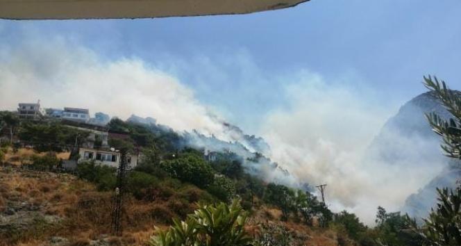 Hatayda orman yangını: Alevler evlere sıçradı
