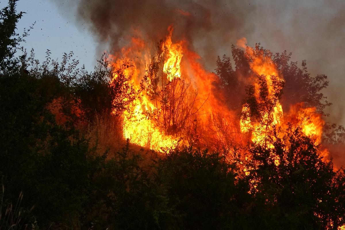 Adıyaman'da korkutan bahçe yangını