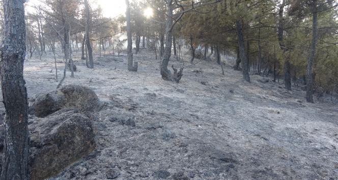 Uşakta çıkan orman yangını kontrol altına alındı
