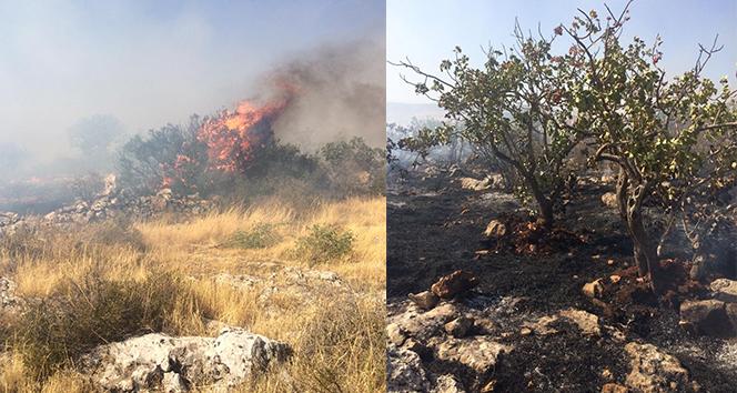 Gaziantepte orman yangını