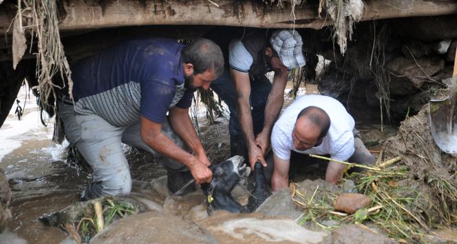 Yüksekovada sel felaketi: 500 koyun sele kapıldı, telef oldu ve kayboldu
