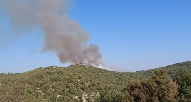 Demrede de orman yangını çıktı